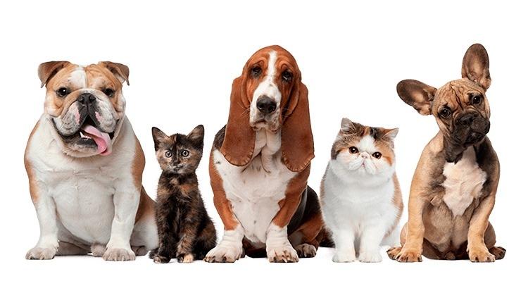 Dicas de Tosa para seu Pet